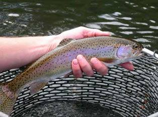 watauga river fly fishing  guide service