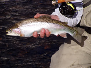 holston river fly fishing guide service